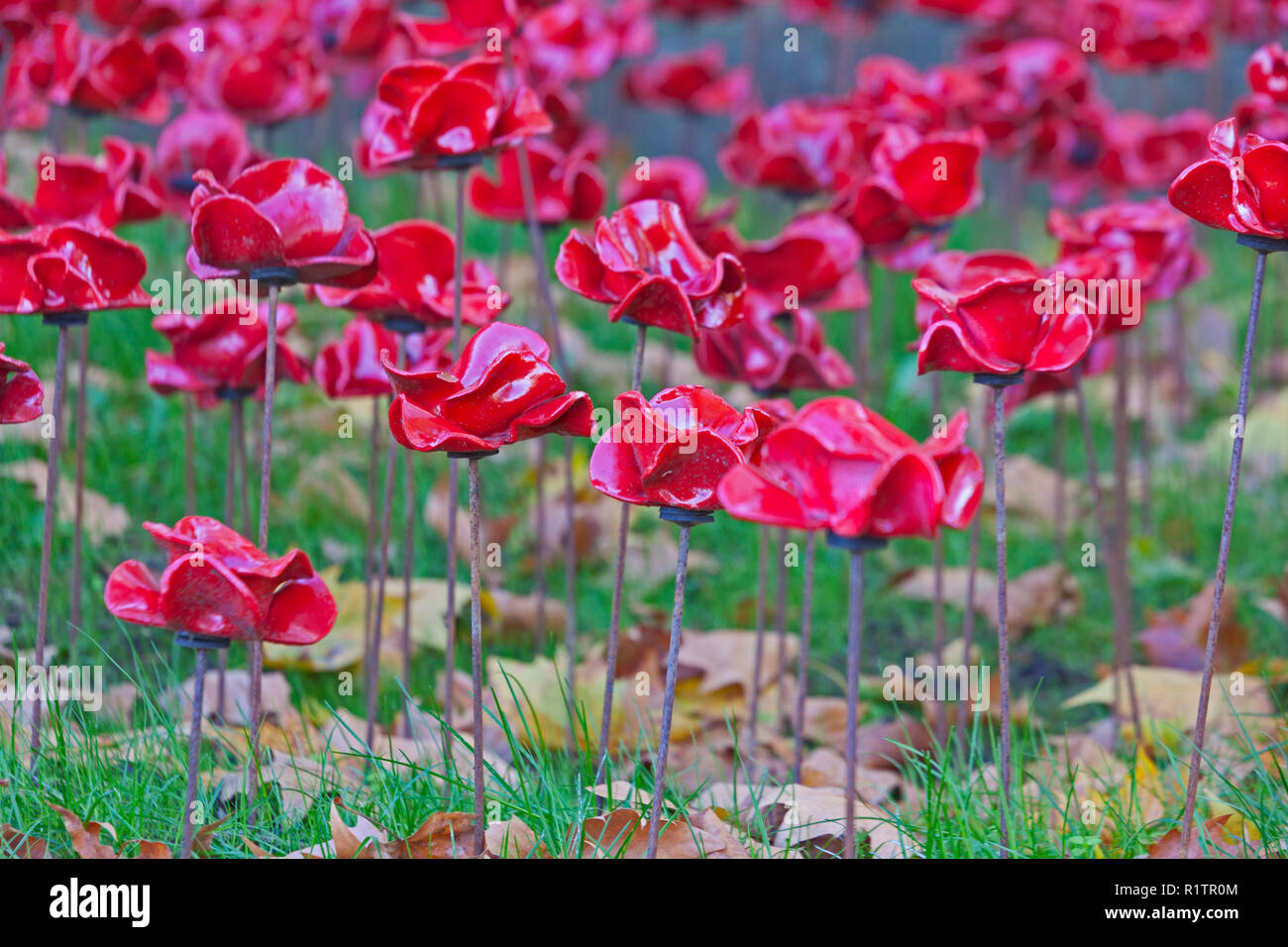 London, Lambeth.  Ceramic poppies in the 'Weeping Window' installation at the Imperial War Museum, marking the centenary of the end of World War I. - Stock Image
