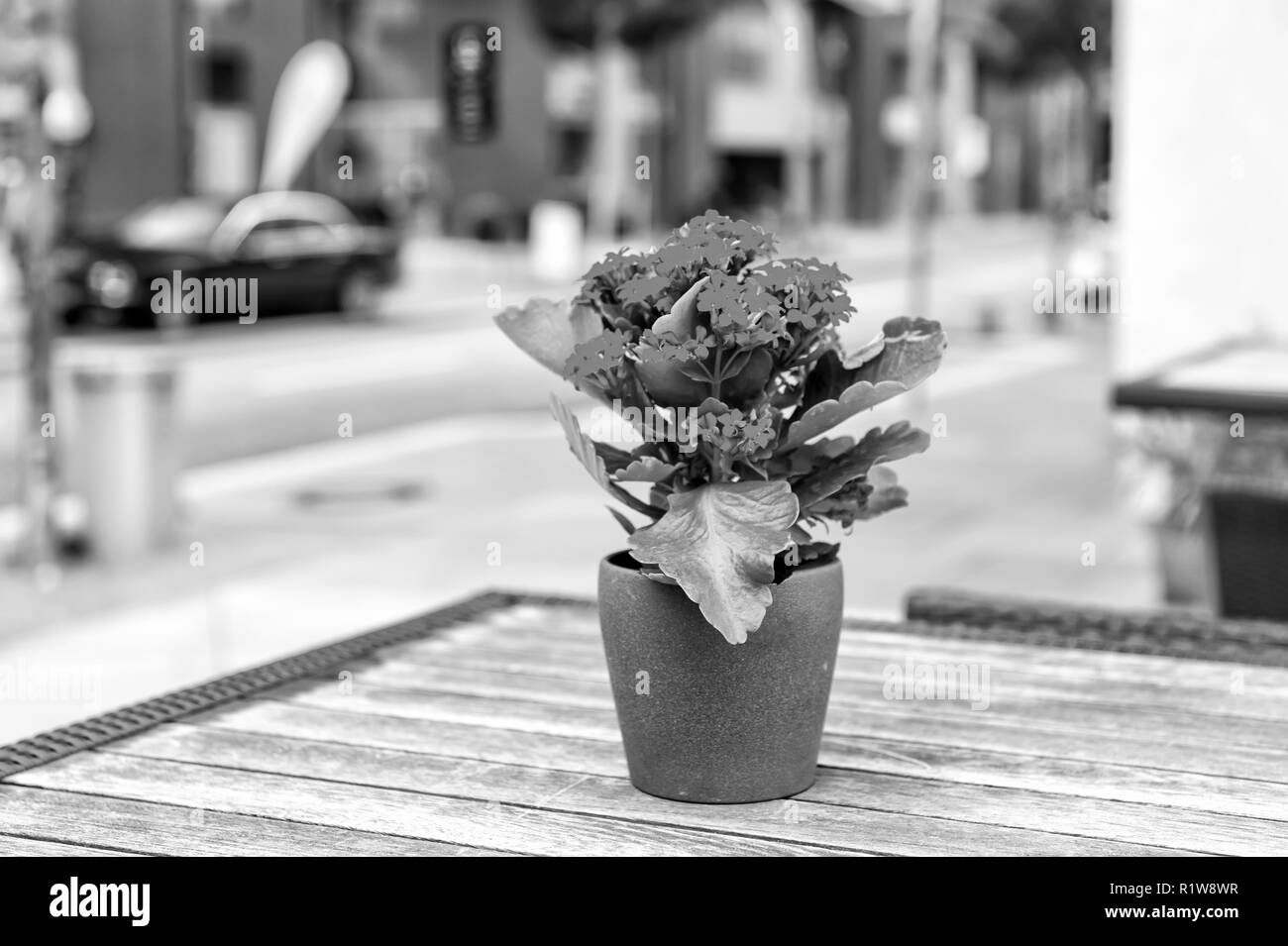 Flower blossoming in pot on table outdoor in Hamburg, Germany. Flower arrangement, floristry, floral decor, design. - Stock Image