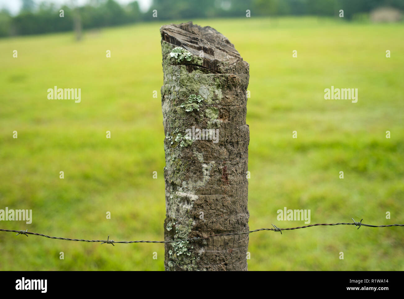 Natural Rough Wooden Fencepost with Barbed Wire on a Green Meadow with Blurred Background - Stock Image
