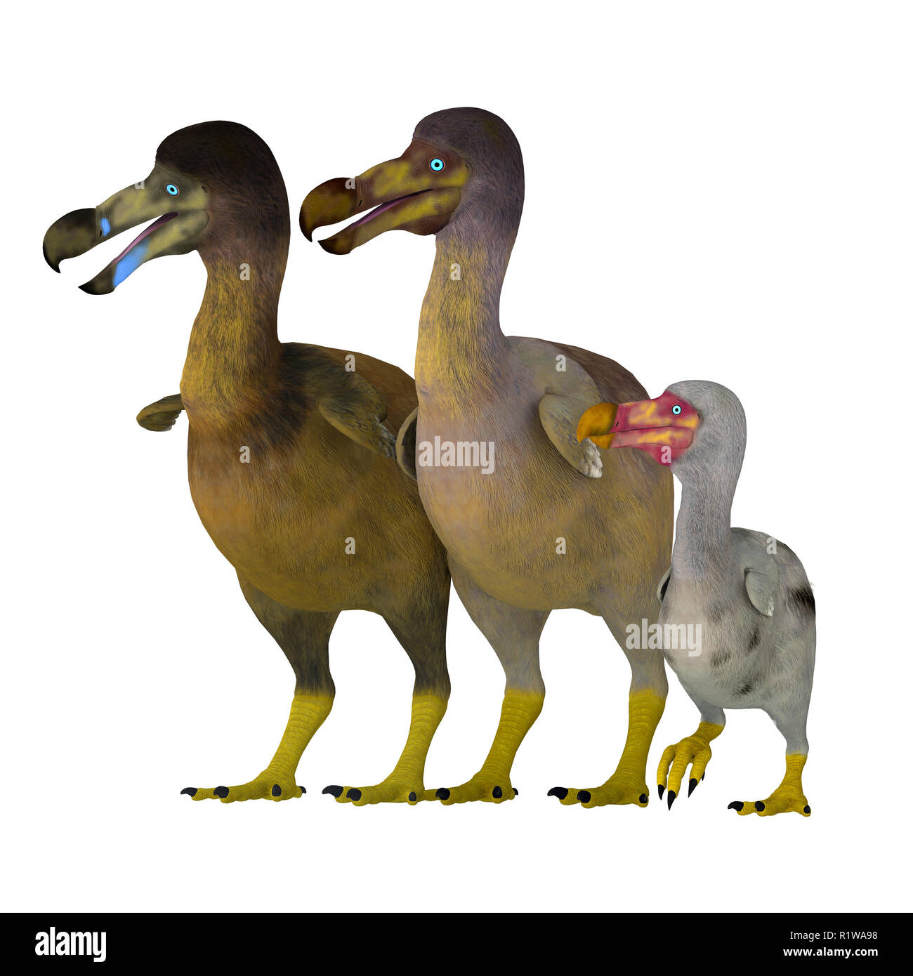 The Dodo is an extinct flightless bird that lived on Mauritius Island in the Indian Ocean near Madagascar. - Stock Image