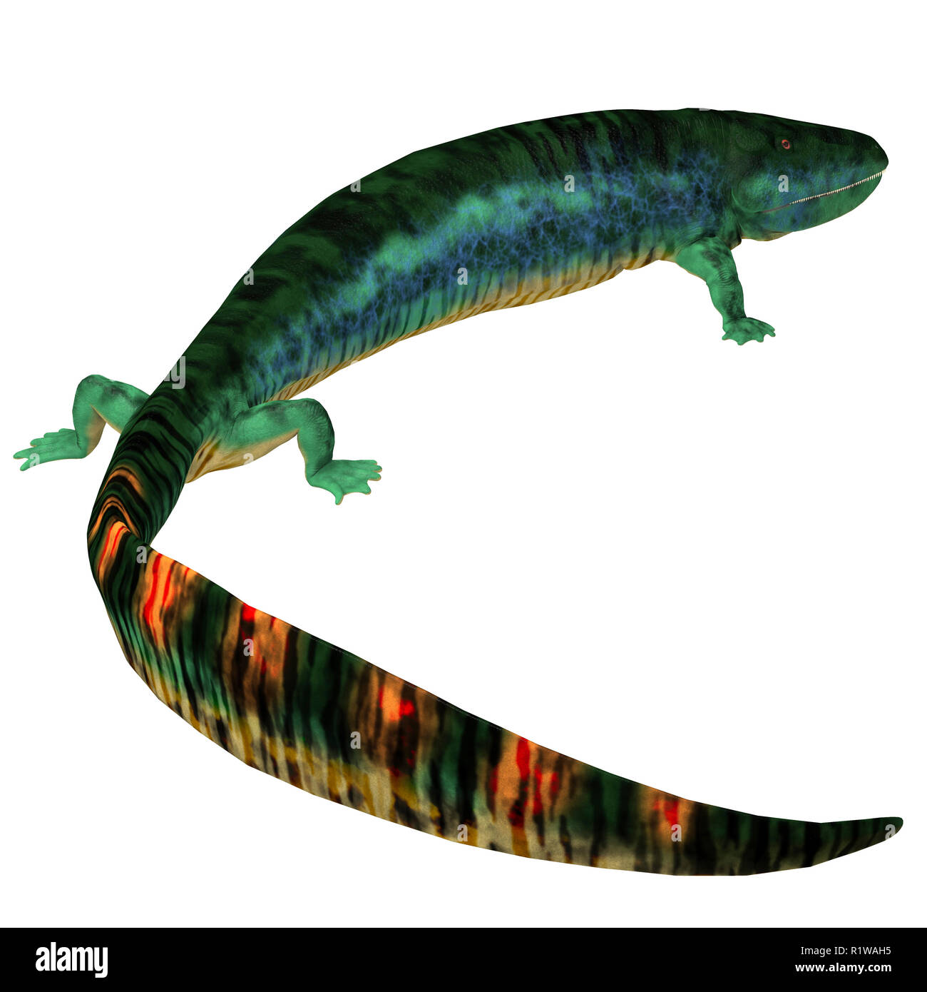 Eogyrinus was an amphibian tetrapod that lived in England during the Carboniferous Period. - Stock Image