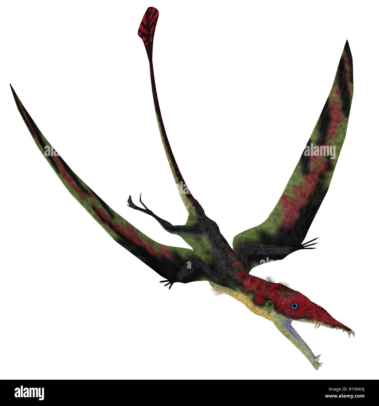 Eudimorphodon Pterosaur Diving - Eudimorphodon was a carnivorous Pterosaur bird that lived in Italy during the Triassic Period. - Stock Image