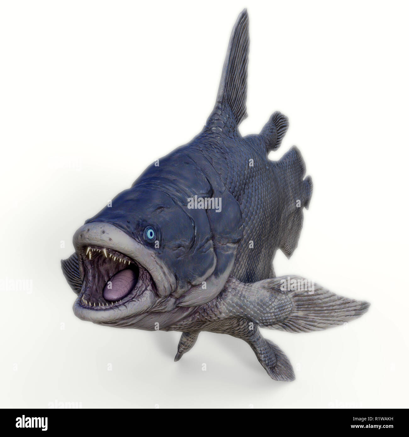 Mawsonia was a extinct coelacanth lobe-finned fish that prowled the deep ocean during the Triassic and Cretaceous Periods of North Africa and Brazil,  - Stock Image
