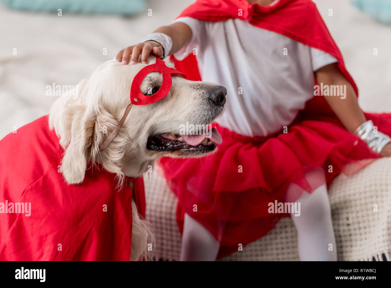 Partial view of hand petting happy golden retriever dog in superhero costume - Stock Image