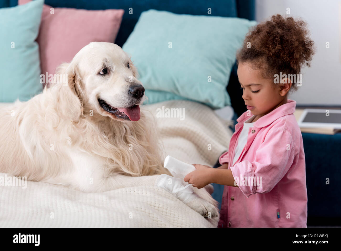 Cute african american child bandages paw dog - Stock Image