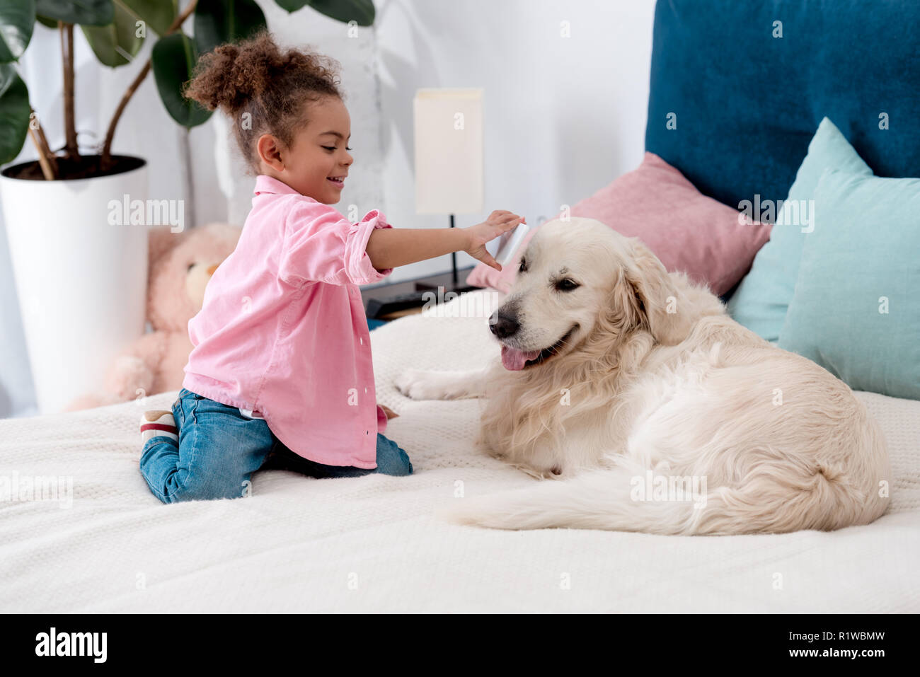 curly african american child sitting on the bed and shows smartphone screen to retriever - Stock Image