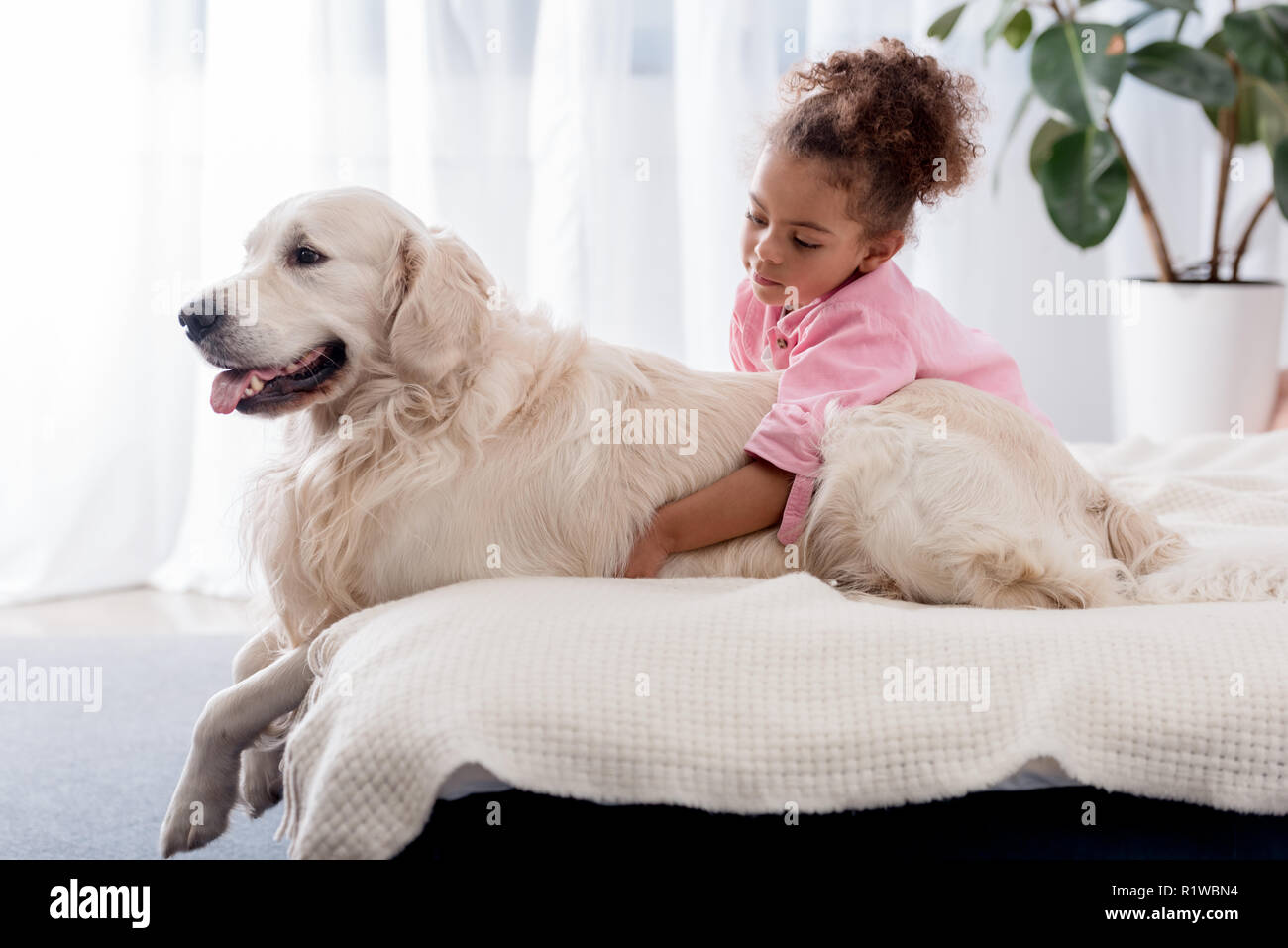 Cute african american kid hugs her retriever on the bed Stock Photo