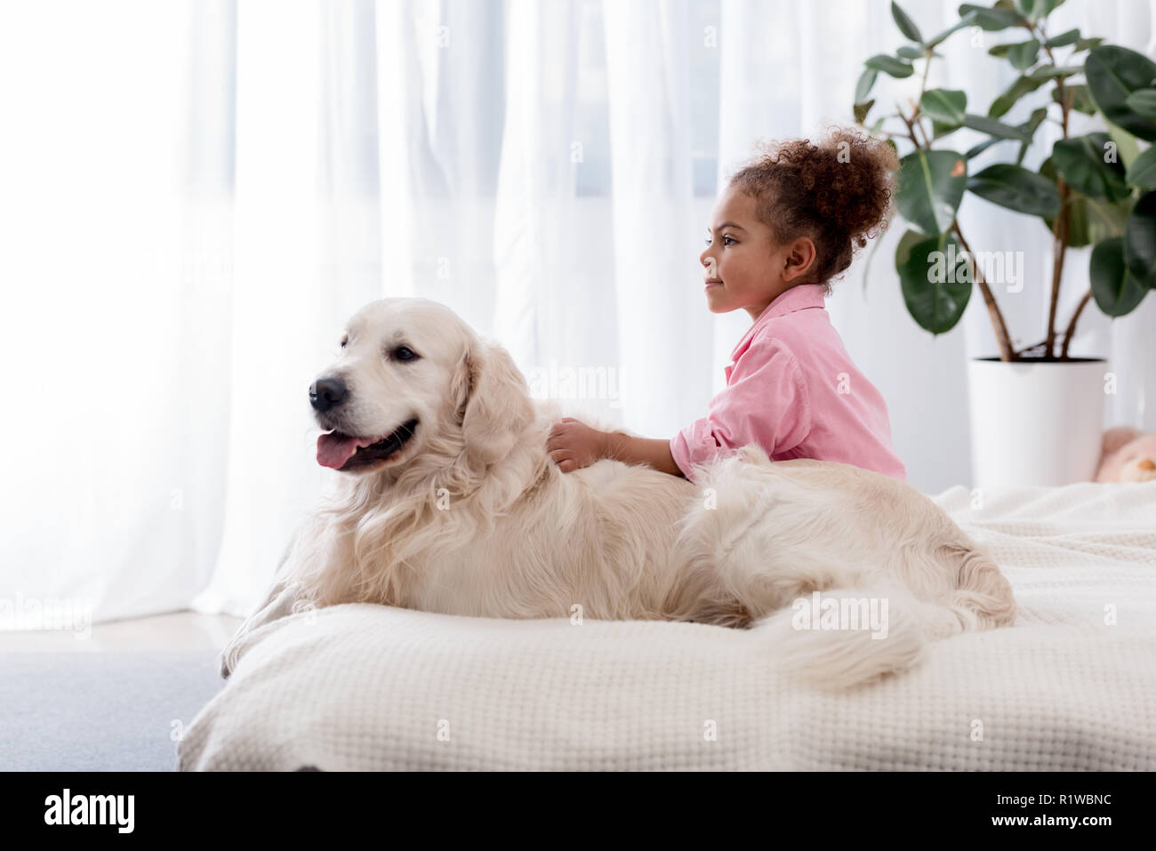Adorable african american kid sitting on the bed on the side of her golden retriever - Stock Image
