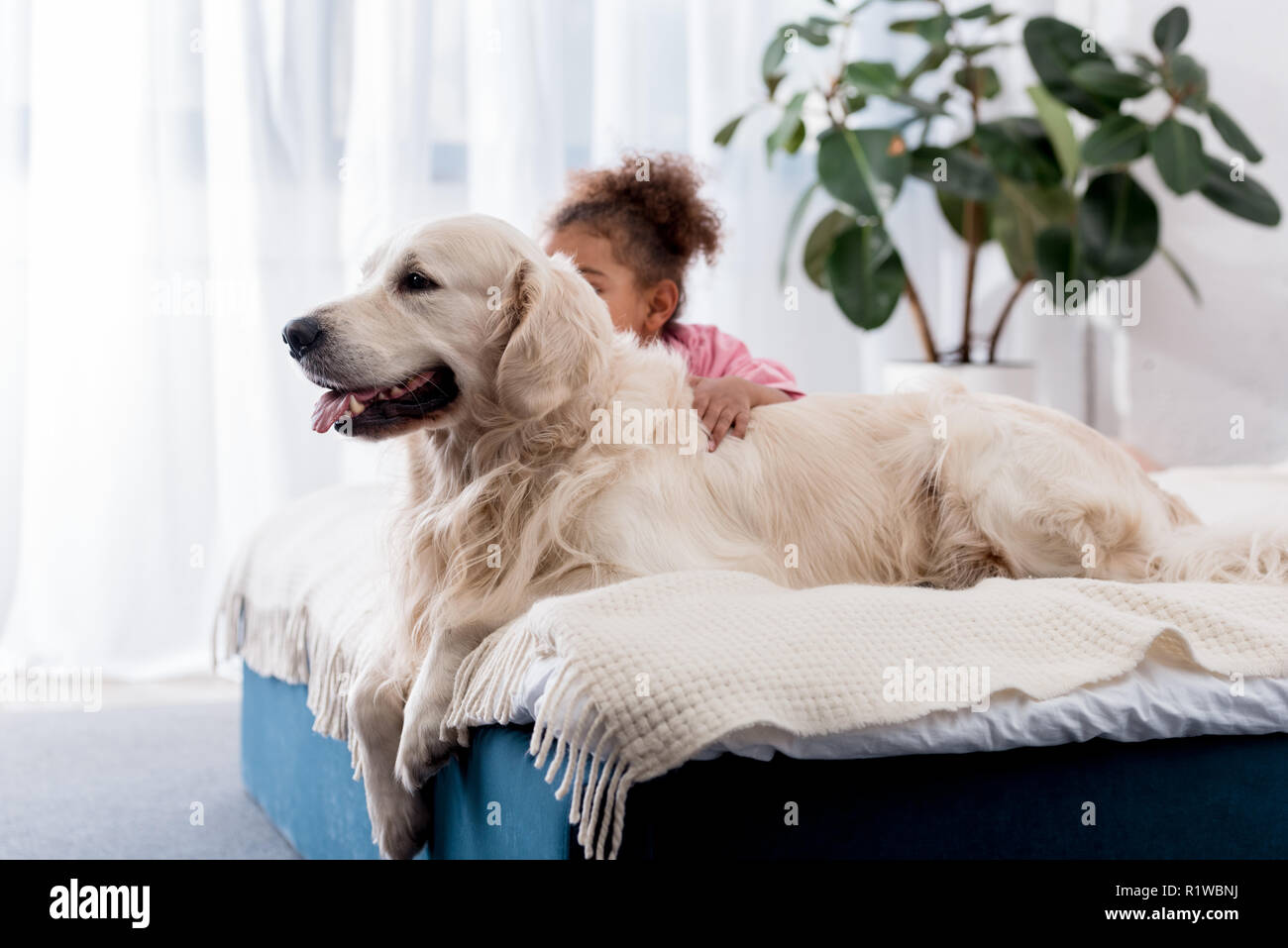 Adorable african american kid sitting on the bed behind her golden retriever - Stock Image