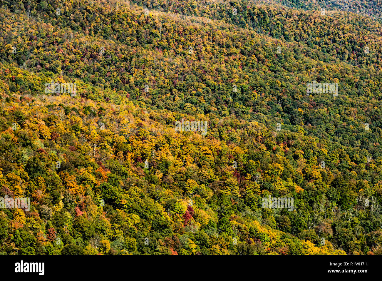 Blue Ridge Mountains In The Autumn In Asheville North