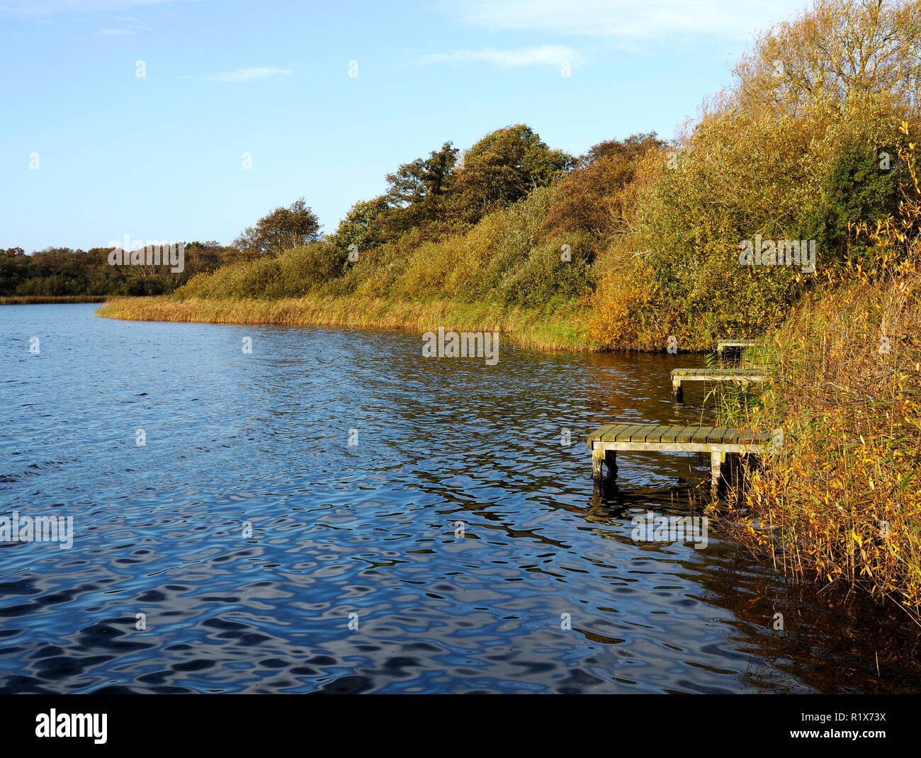 Autumn colours and fishing platforms in the reed beds of Rollesby Broad, part of the Trinity Broads nature conservation area in Norfolk. Stock Photo