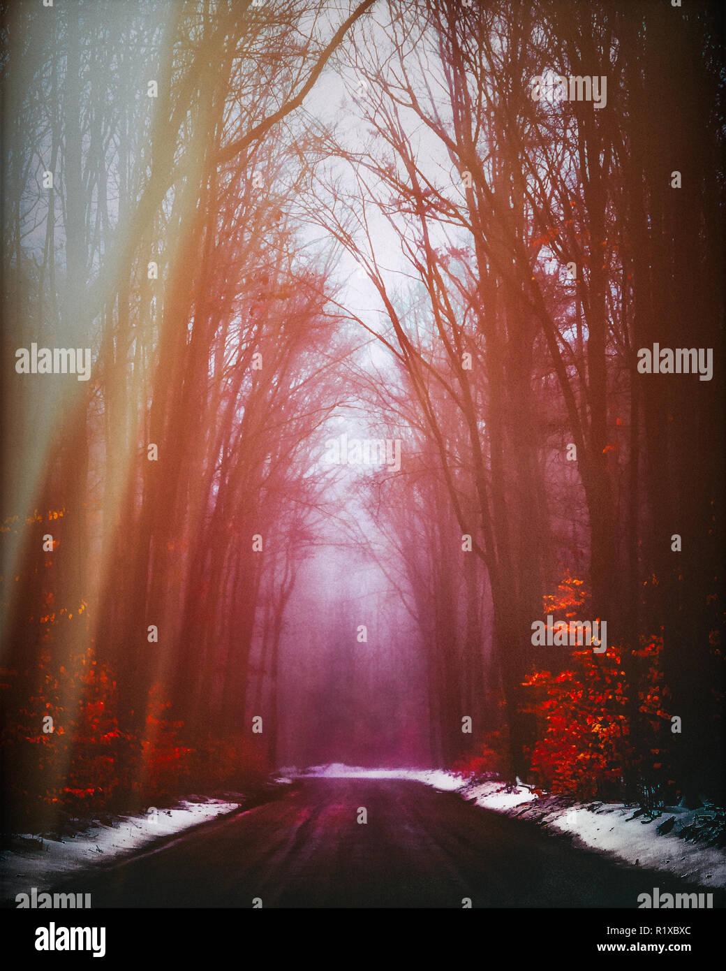 Seasonal Country Road. Dream-like Mood. - Stock Image