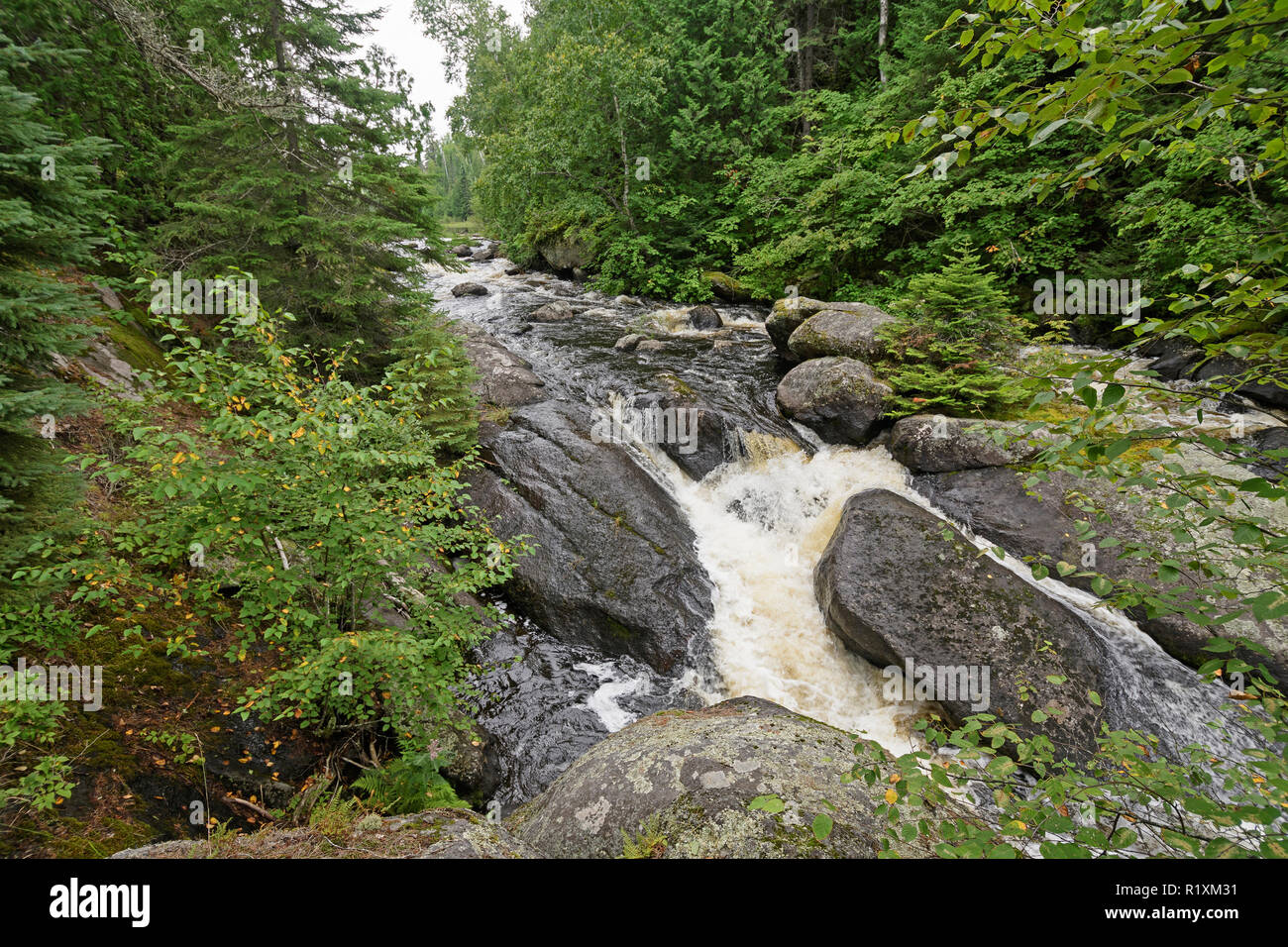 Roaring Waters in the Pines of the Boundary Waters in Minnesota - Stock Image