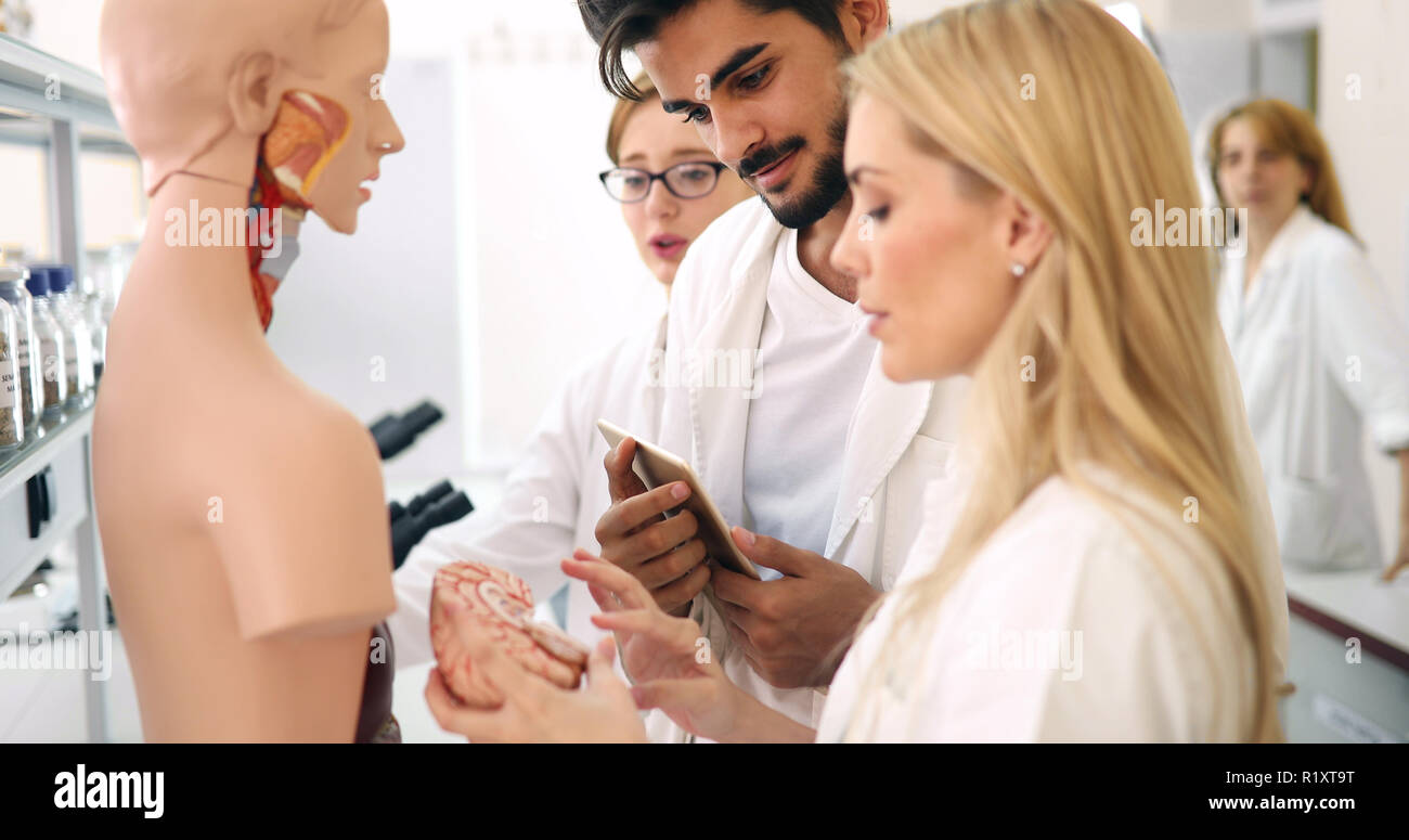 Students of medicine examining anatomical model in classroom - Stock Image