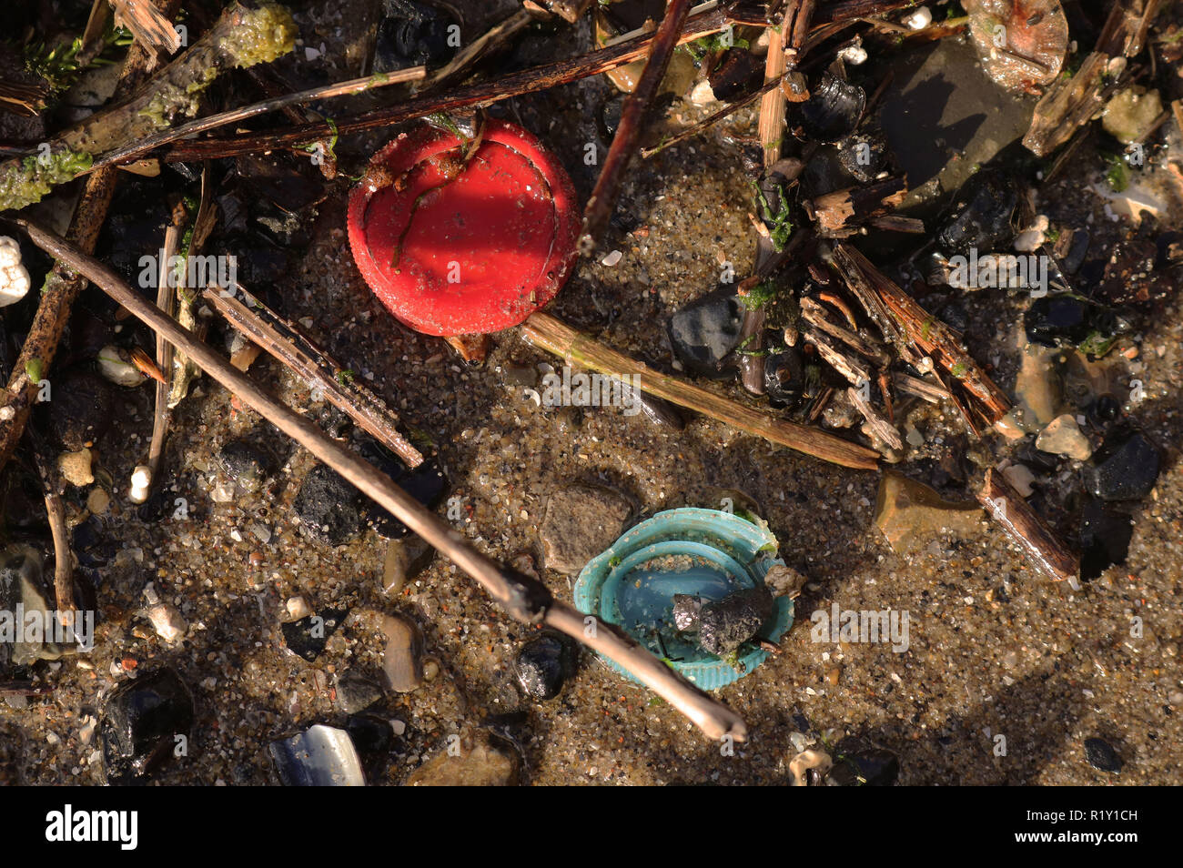 Plastic Bottle tops found in the River Thames to show the high use of Plastic used in the environment. - Stock Image