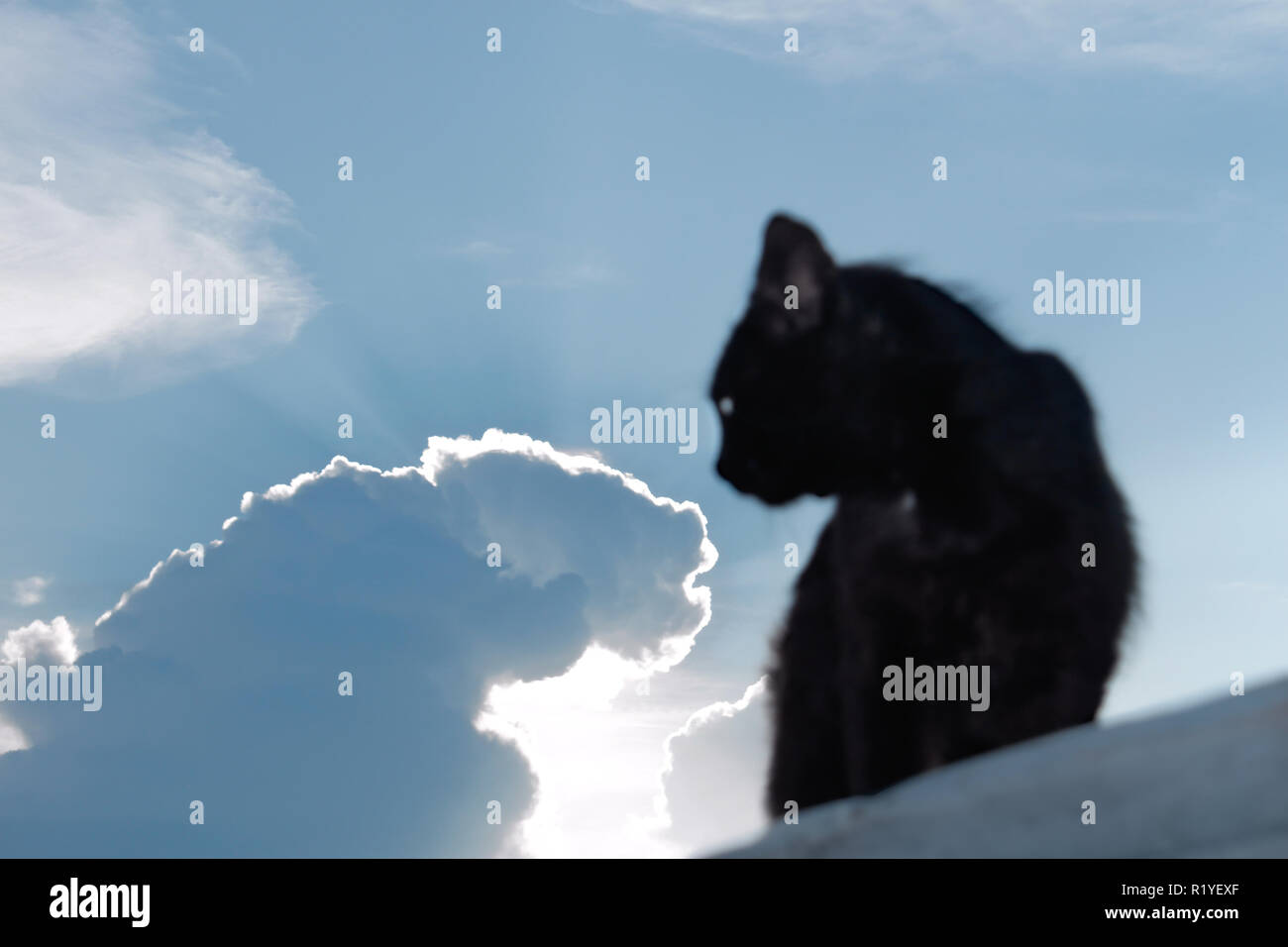 Black cat on a background of the evening sky with the sun behind the clouds Stock Photo