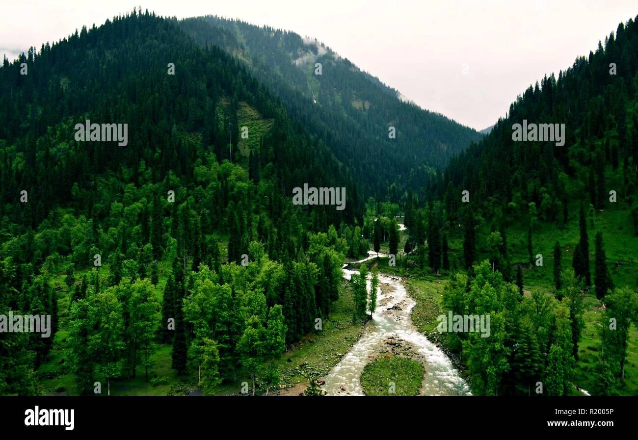 Green land beautifully - Stock Image