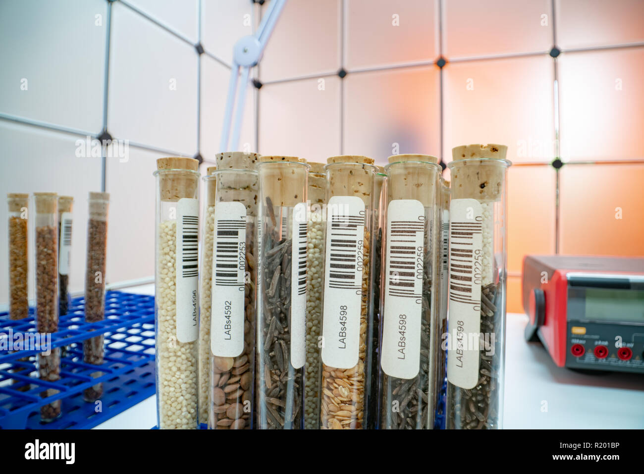 Gene banks plants.  Study of agricultural seeds in the lab - Stock Image