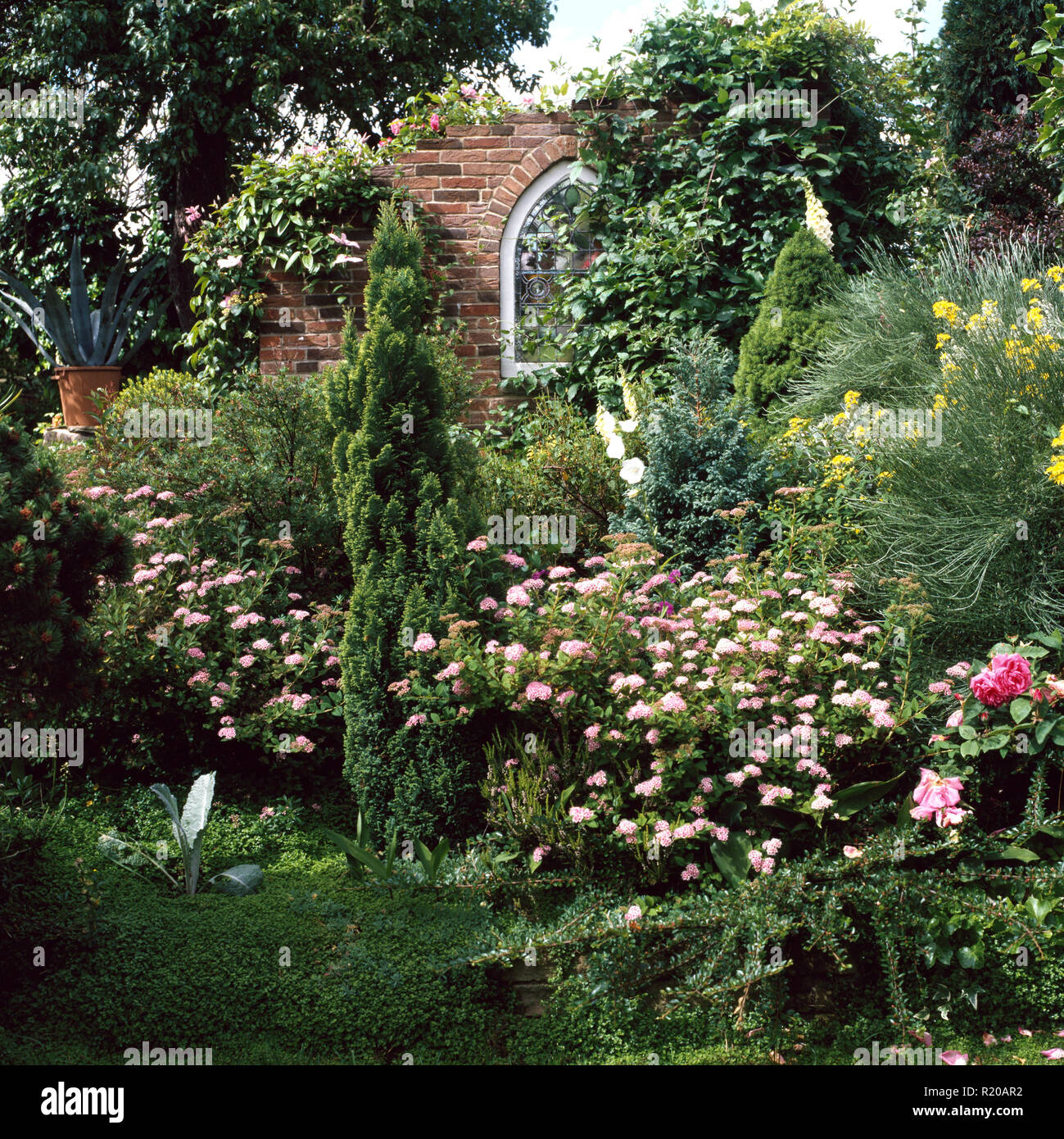 Fastigiate yew and pink roses in well stocked garden - Stock Image