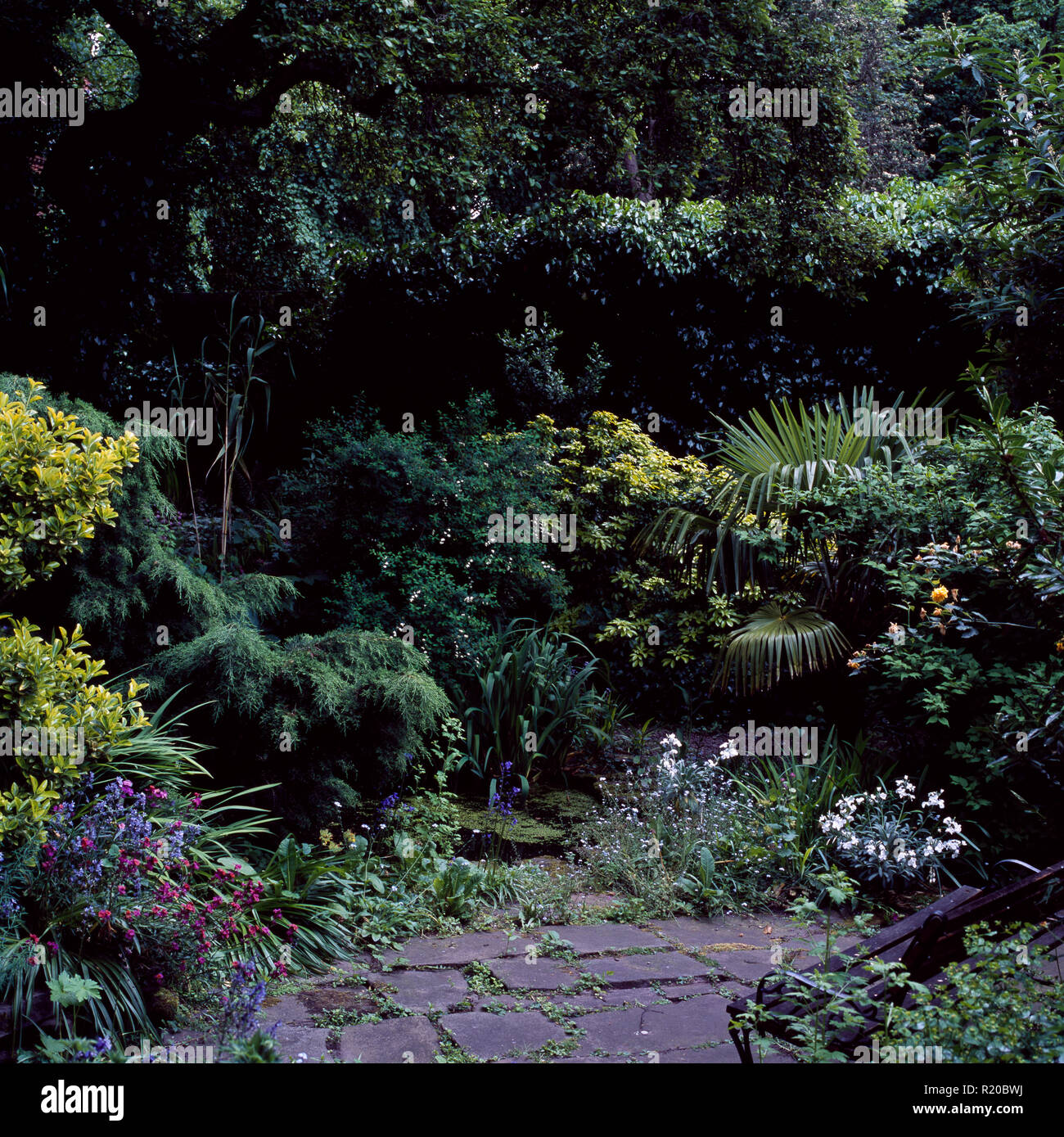 Low conifers and green shrubs around small garden pool - Stock Image
