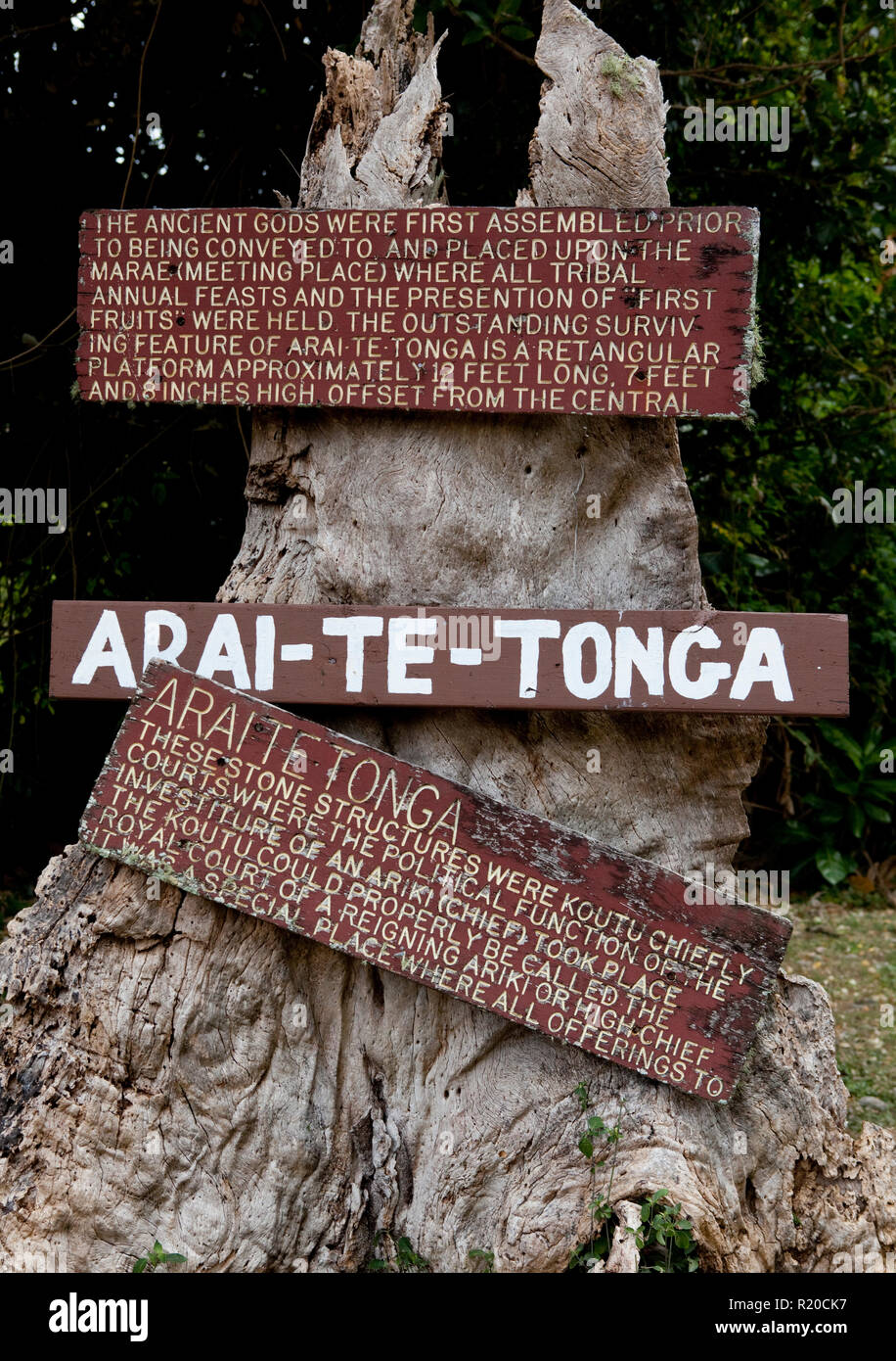 Arai Te Tonga info tree on Rarotonga, Cook Islands. - Stock Image