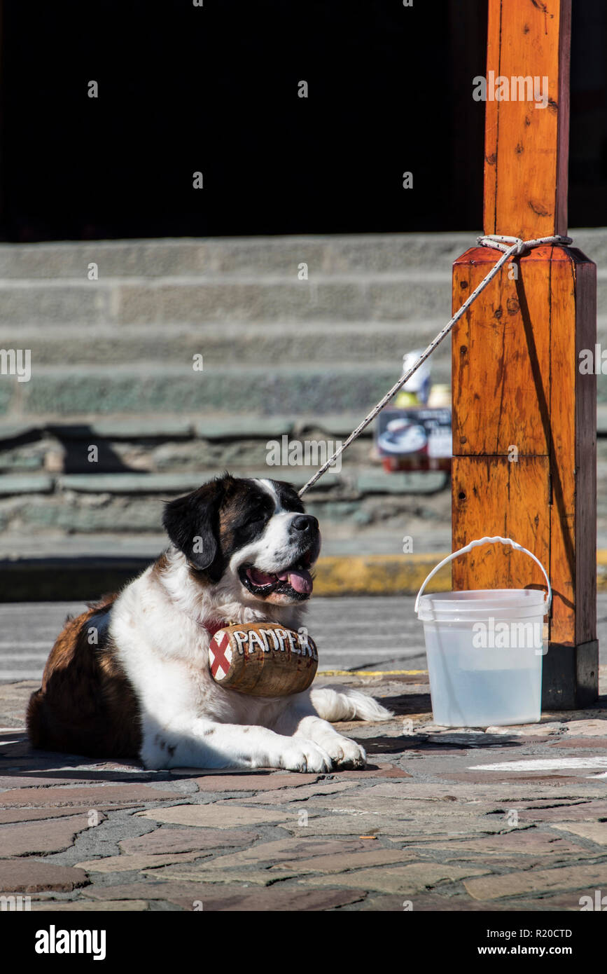 The mascot waiting for tourists - Stock Image