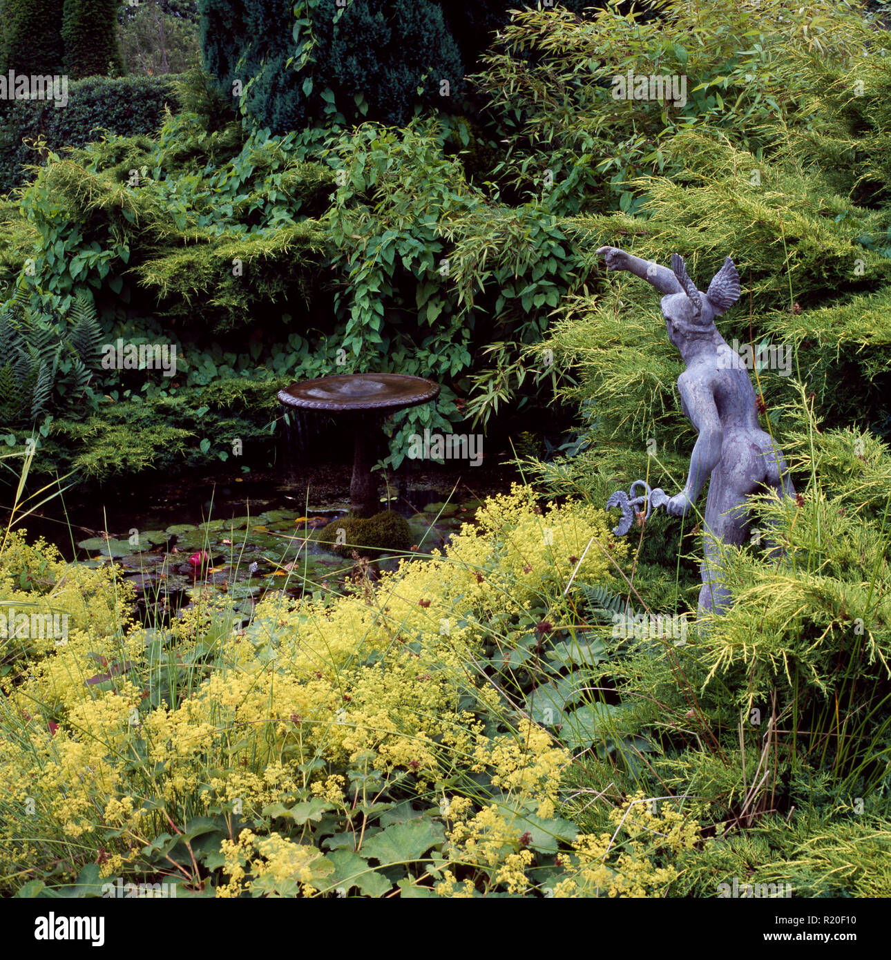 Statue among alchemilla mollis beside water feature - Stock Image