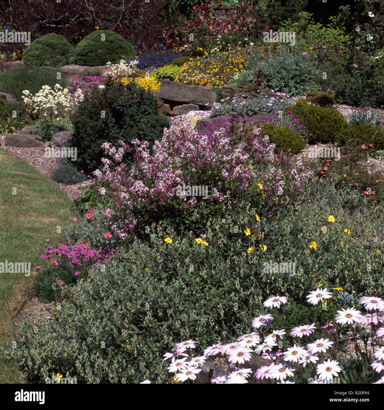 Perennials in large summer border - Stock Image