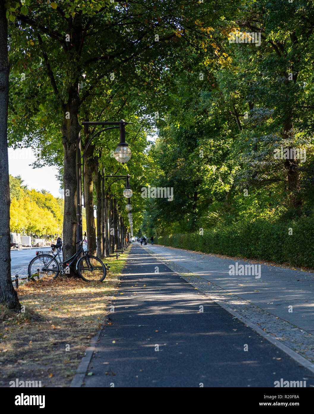 Black bicycle parked against a tree, on a empty bike lane, in Berlin, wallpaper. - Stock Image