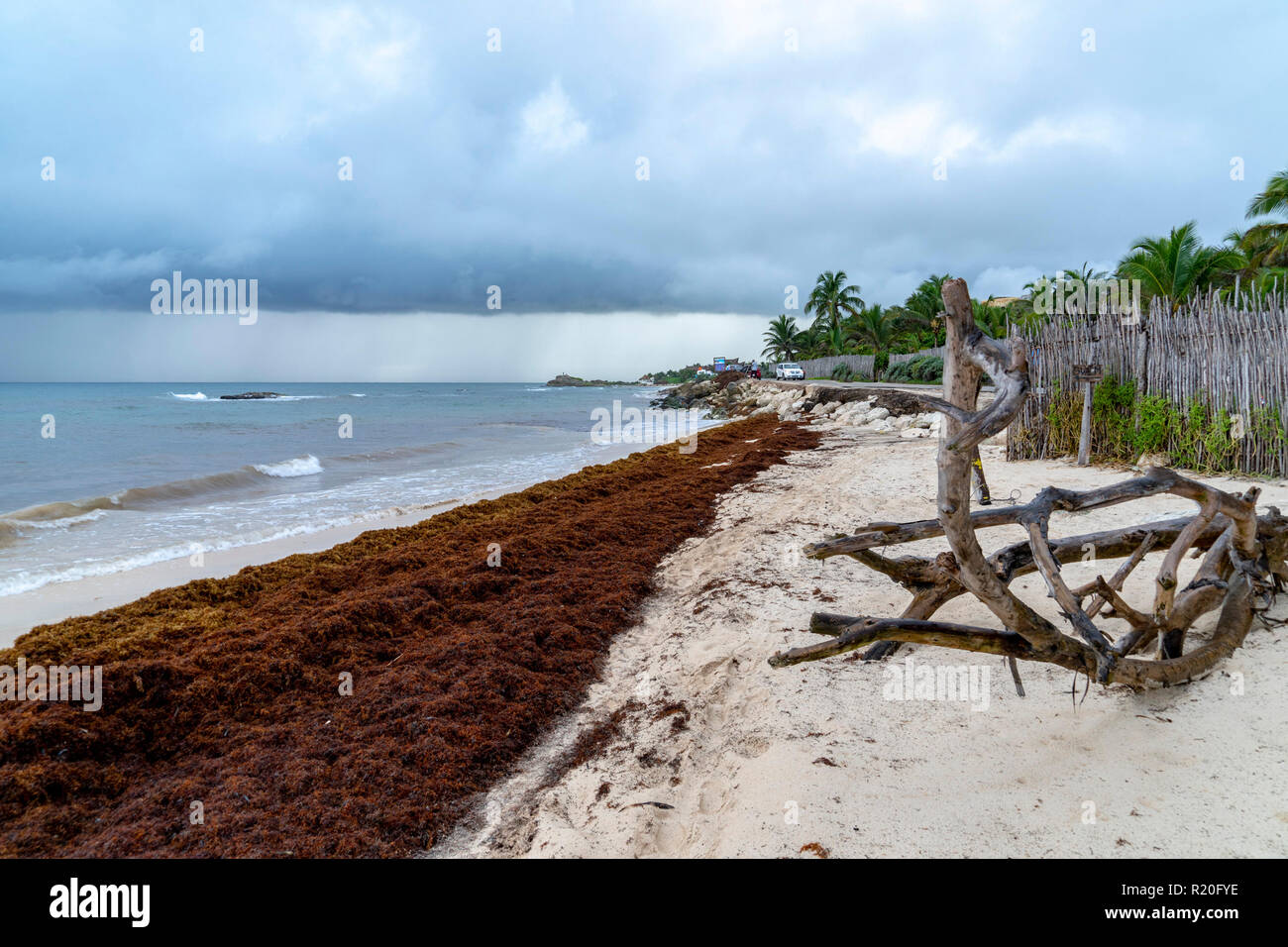 Caribbean Seaweed Map 2019