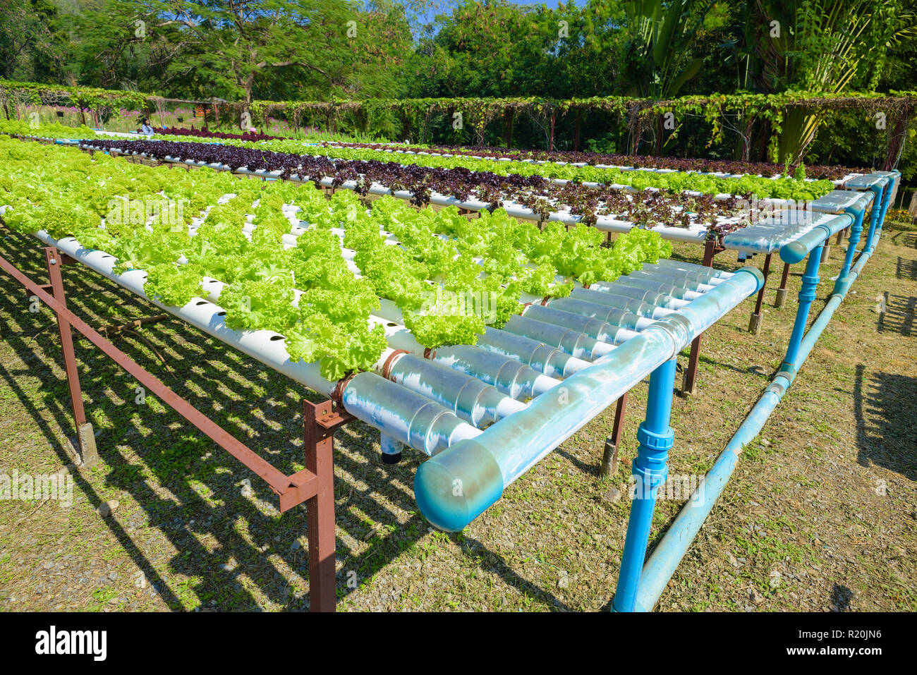 Vegetables growing with Hydroponic Gardening System ...