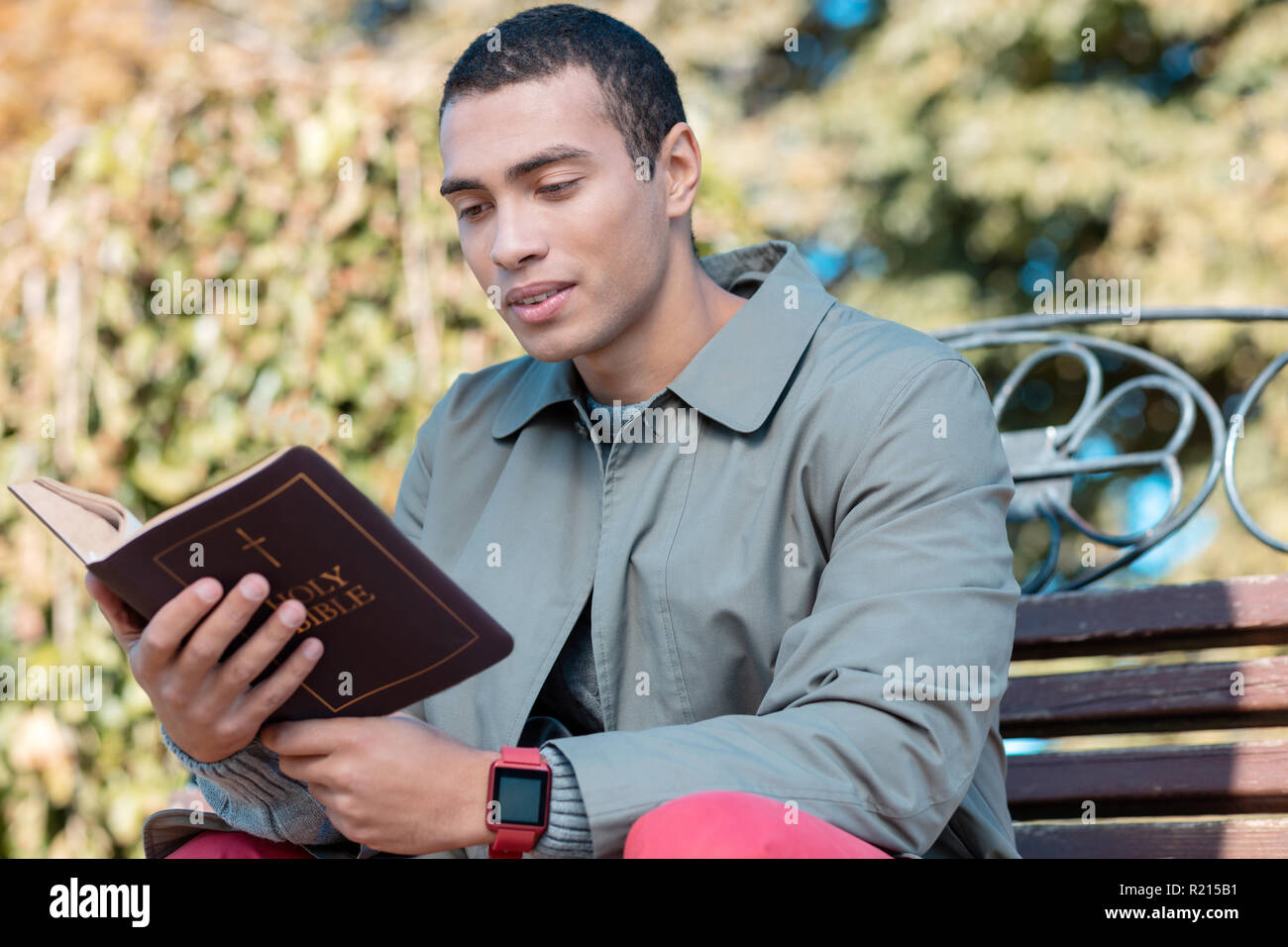 Concentrated religious man reading Bible in park - Stock Image