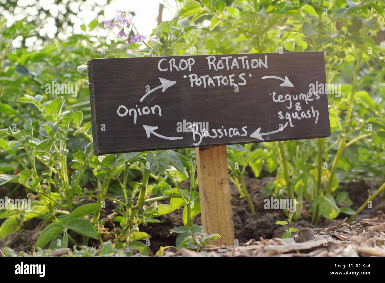 Sign depicting four year crop rotation system in an English allotment garden, UK - Stock Image