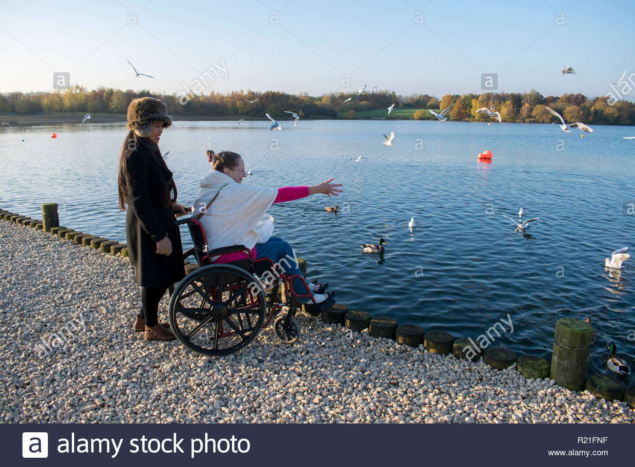 A Disabled Female in her Wheelchair and her Carer Feeding the Birds at Lake Stock Photo