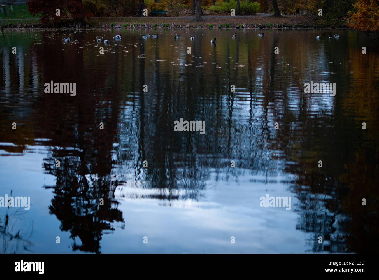 Reflections of the sky and trees in the water - Stock Image