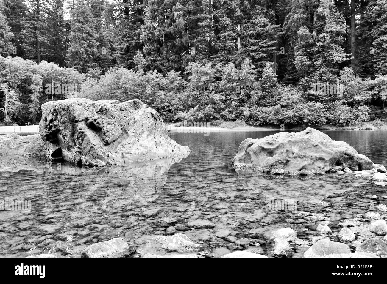 The Smith River at Jedediah Smith Redwoods State Park in black and white - Stock Image