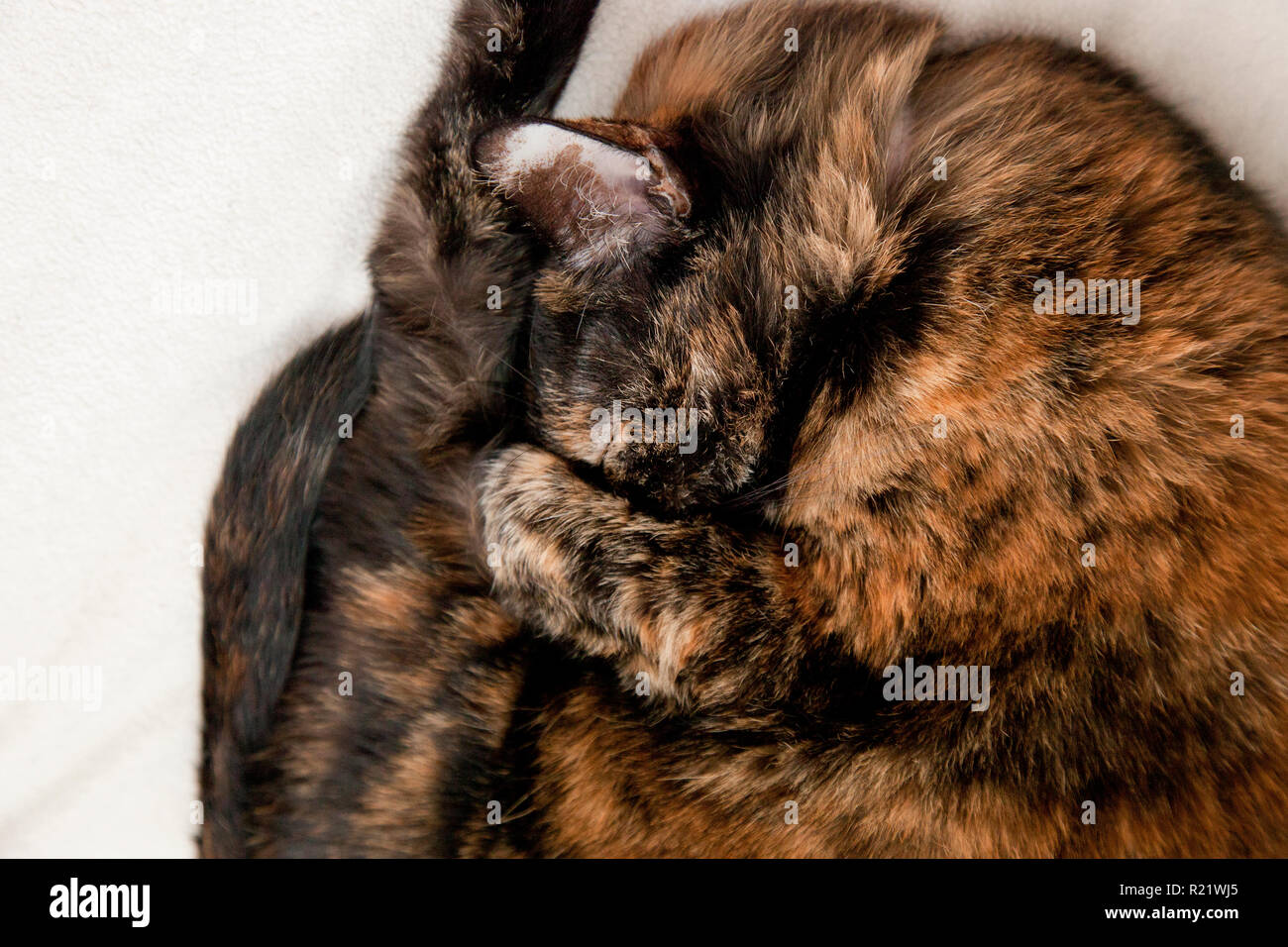 Cute little cat curled up wanting to be left alone to sleep and hide - Stock Image