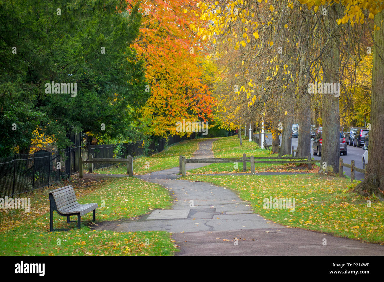 Red and yellow autumn leaves on trees above a pedestrian footpath on The Backs in Cambridge, UK - Stock Image