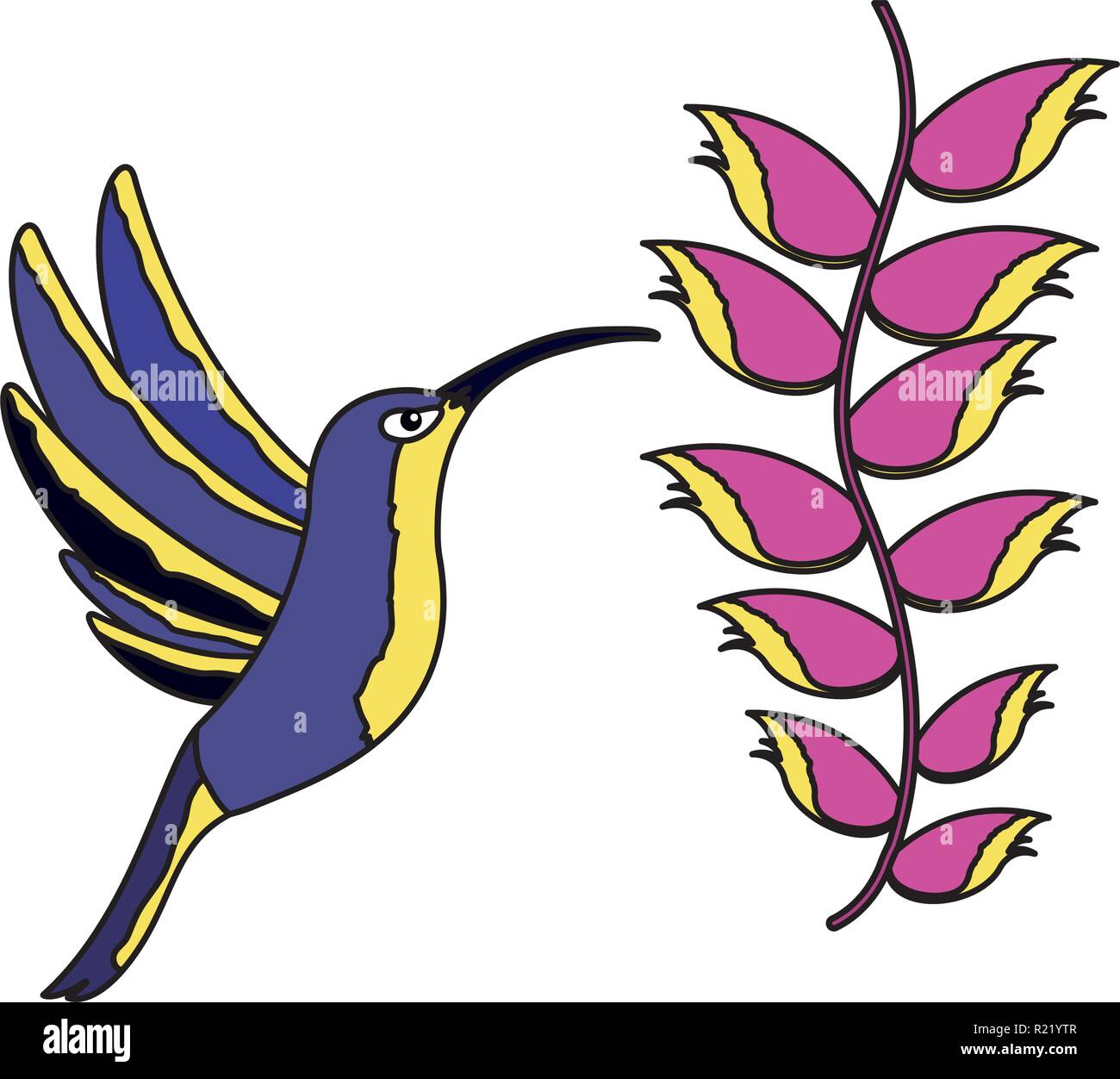 hummingbird bird heliconia flower tropical vector illustration - Stock Vector