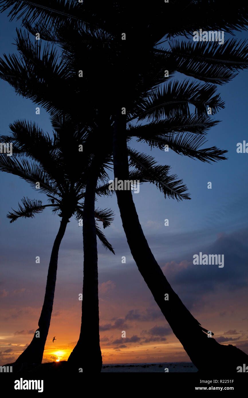 Sunset silhouettes on Aitutaki, Cook Islands. - Stock Image