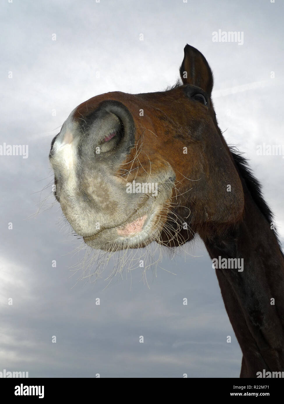 THE LAUGHING HORSE Stock Photo