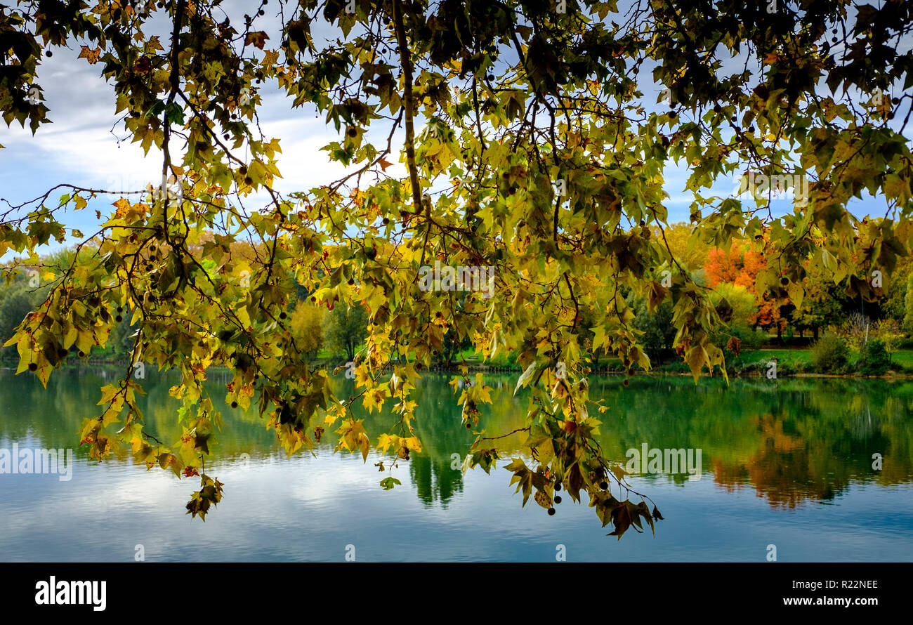 Autumn leaves hang over the Garonne River in Toulouse, France - Stock Image