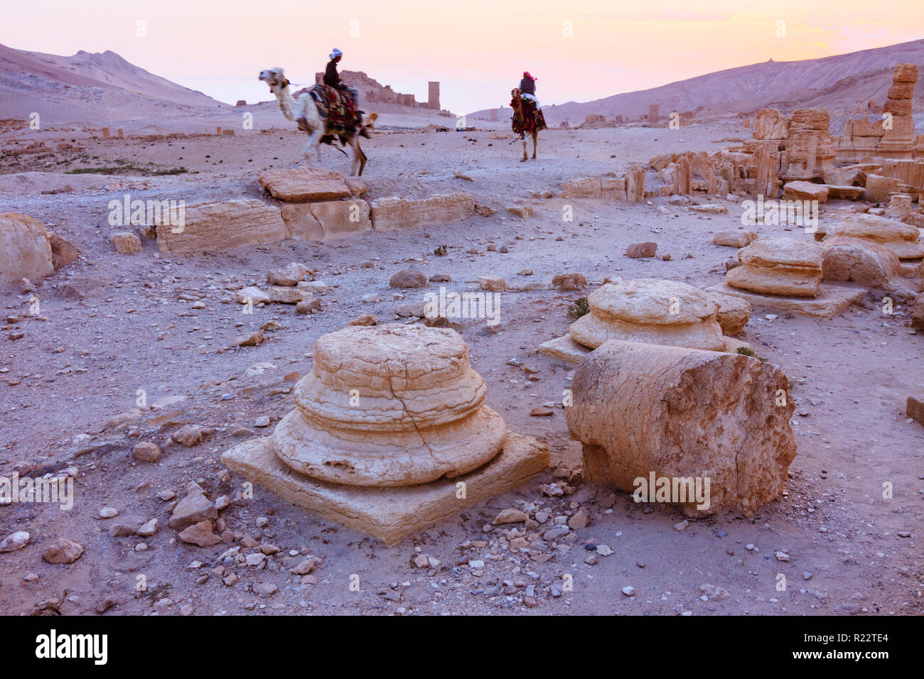 Palmyra, Homs Governorate, Syria - May 26th, 2009 : Bedouin men ride camels through the ruins of Palmyra at sunset. - Stock Image