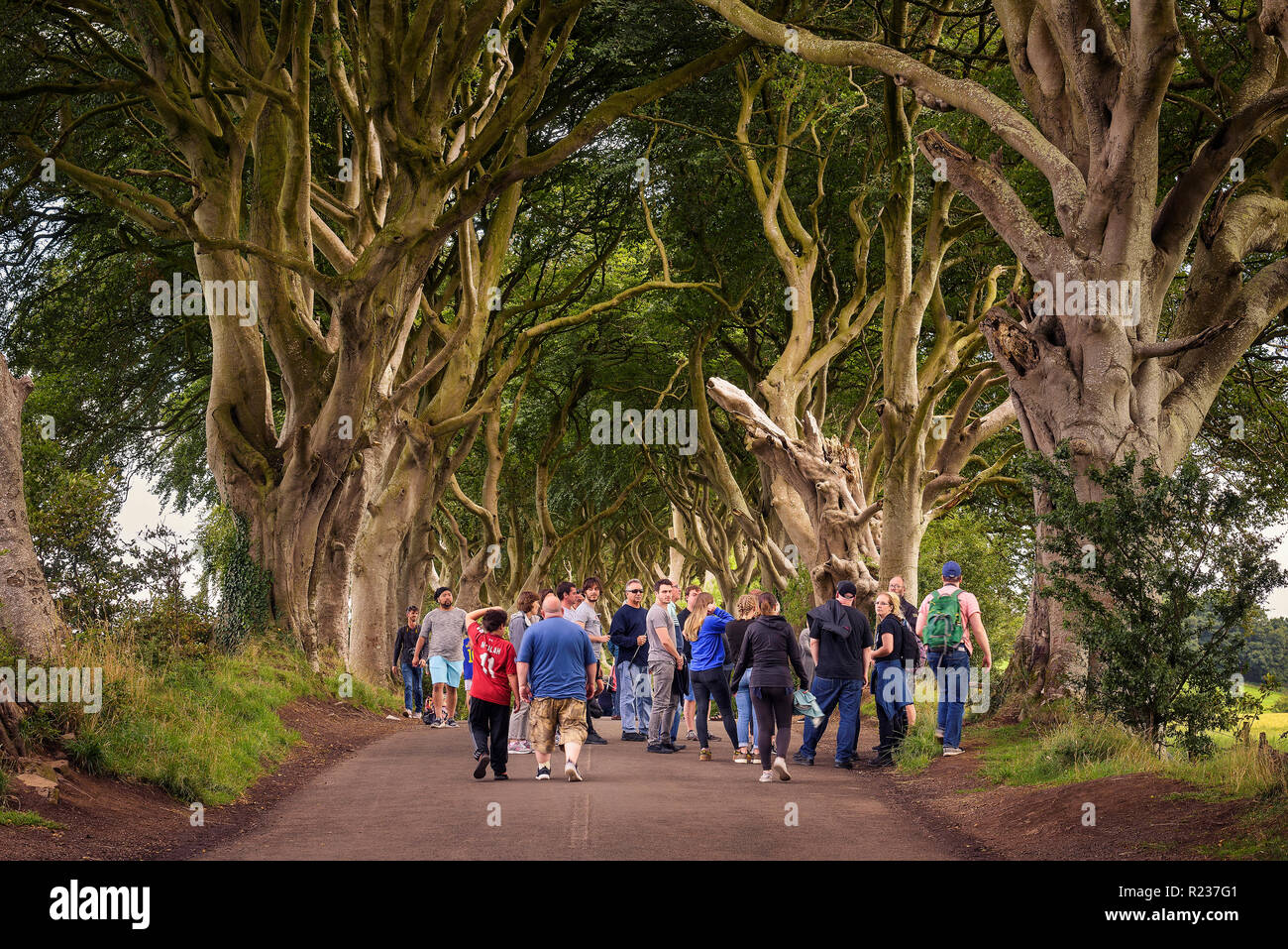 Tourists visiting the Dark Hedges in Northern Ireland Stock Photo
