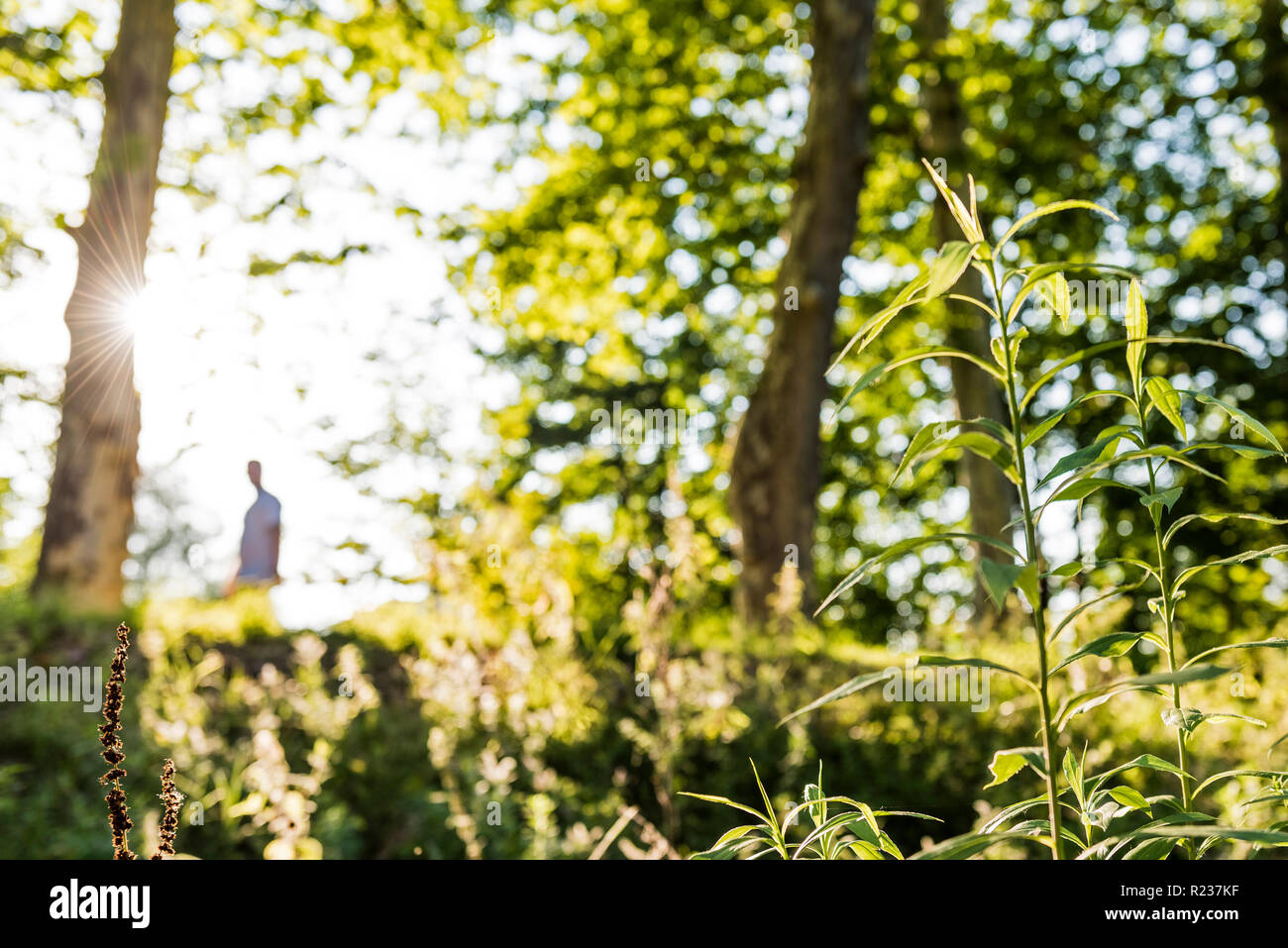Man walking in the Park - Stock Image