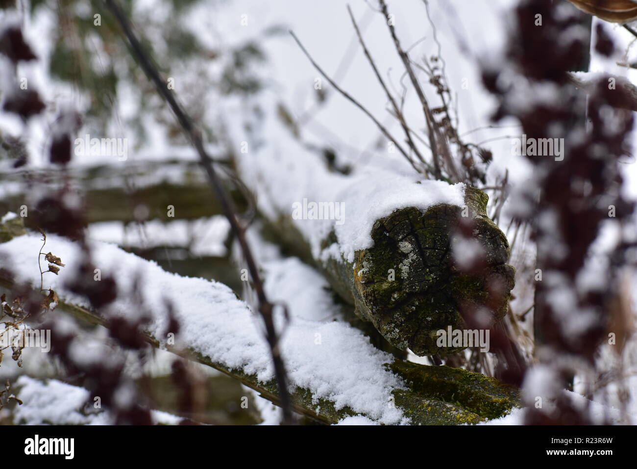 Snow covered cedar log. The snow was still falling lightly. The air was cold. Michigan weather can be unpredictable and beautiful at the same time. - Stock Image