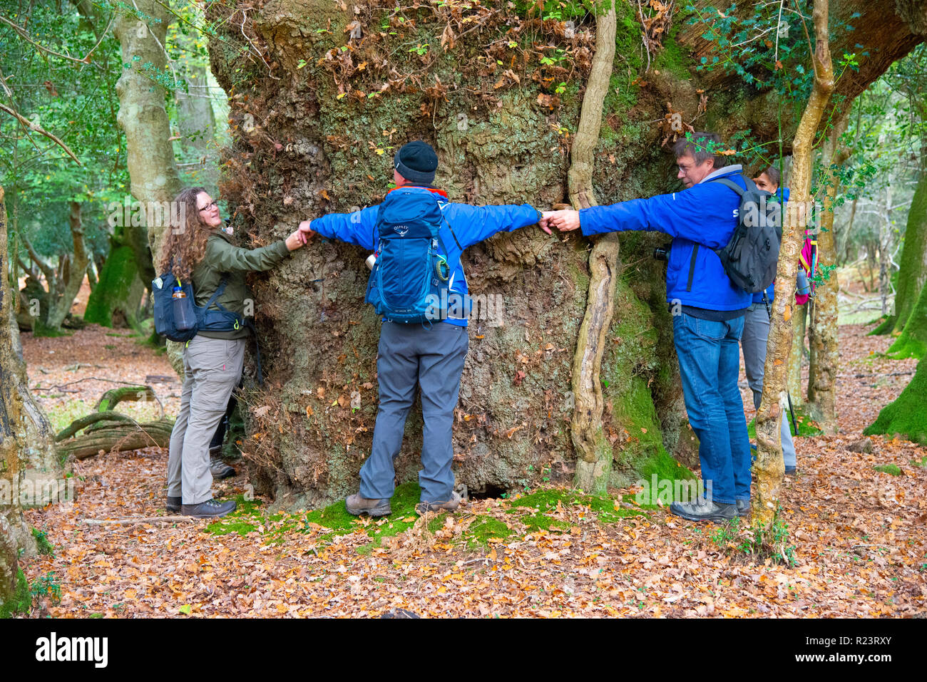 Group of walkers hug the Gritnam Oak with a girth of 8m.It is one of the largest ancient trees in the New Forest National Park, Hampshire, UK, England - Stock Image