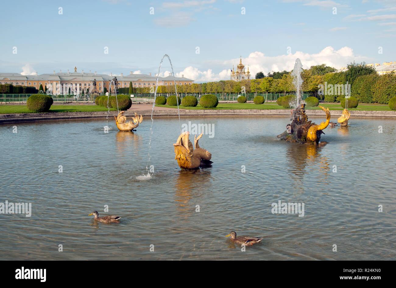 PETERHOF, SAINT-PETERSBURG, RUSSIA - SEPTEMBER 2, 2018: The Upper Garden. Ducks swim in The Mezheumniy (Indefinite) Fountain. - Stock Photo