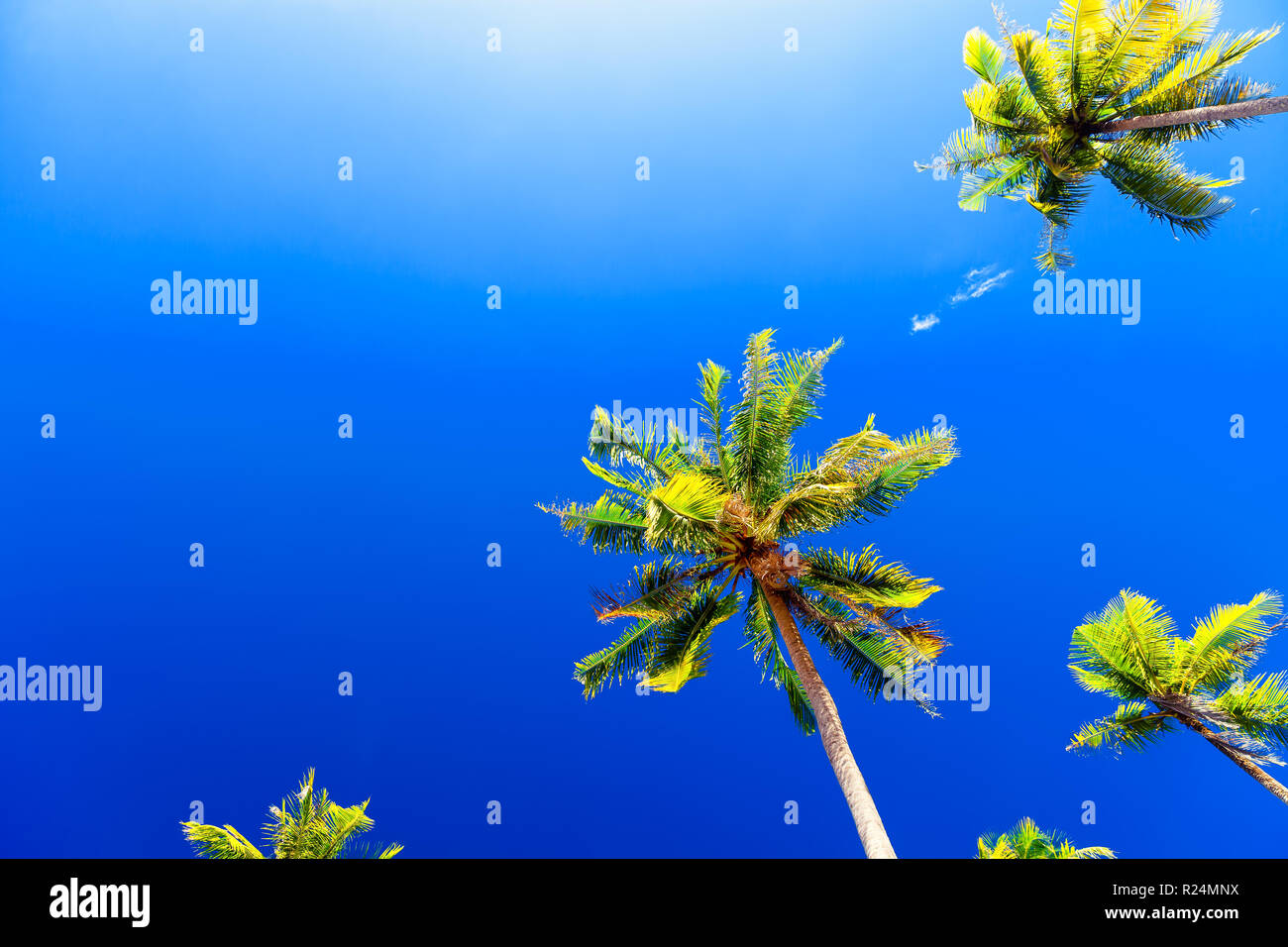 Tropical beach background with palm trees silhouette at sunset. Vintage effect. - Stock Image