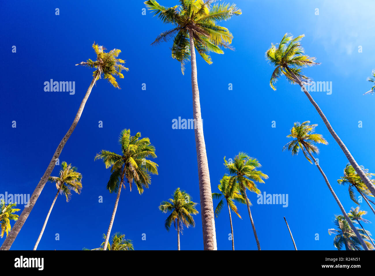 Coconut palm trees on tropical beach on background blue sky - Stock Image